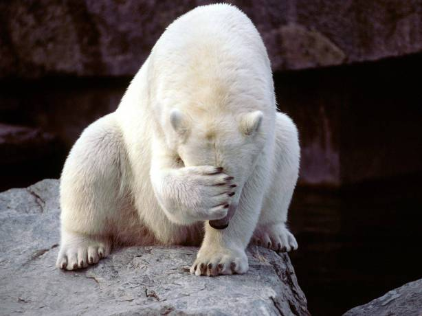 polar%20bear%20facepalm